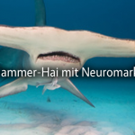 Neuromarketing-Workshop Teil 7: Den Hammer-Hai streicheln