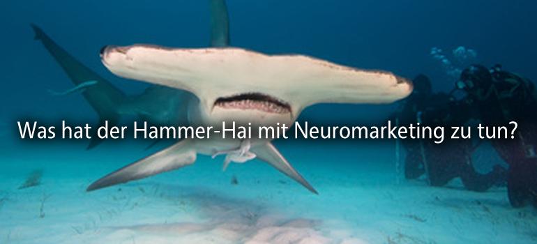 hammer-hai-neuromarketing-workshop