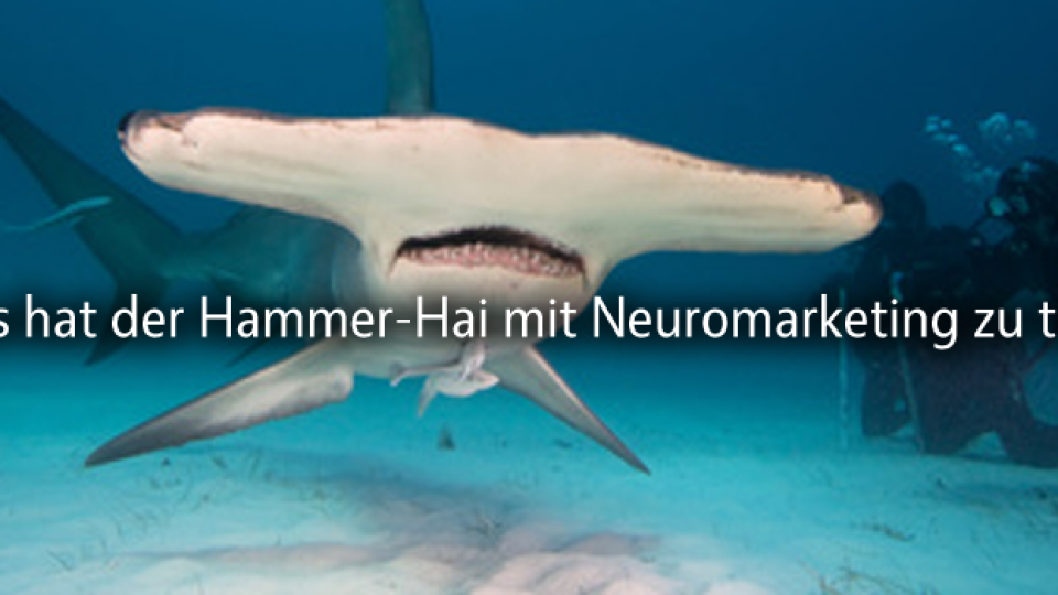 hammer-hai-neuromarketing-workshop
